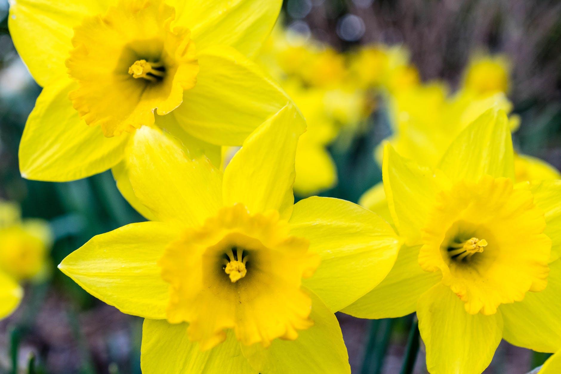 March Specials Menu